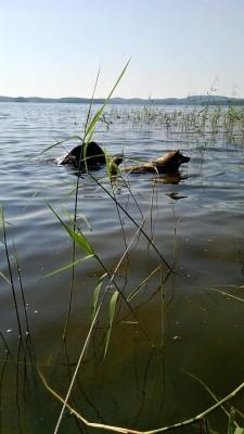 Totu järvessä